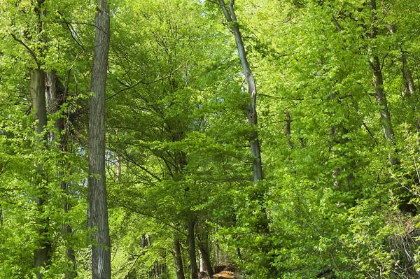 Douglas_Wald-2007-04-23-DSC_6142